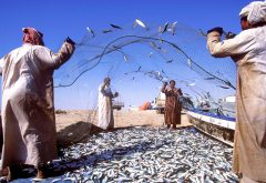 """""""Catch of the day"""": Ihren Fang verkaufen die einheimischen Fischer bis heute auf traditionellen Märkten unter freiem Himmel. Foto: djd/Sultanate of Oman"""