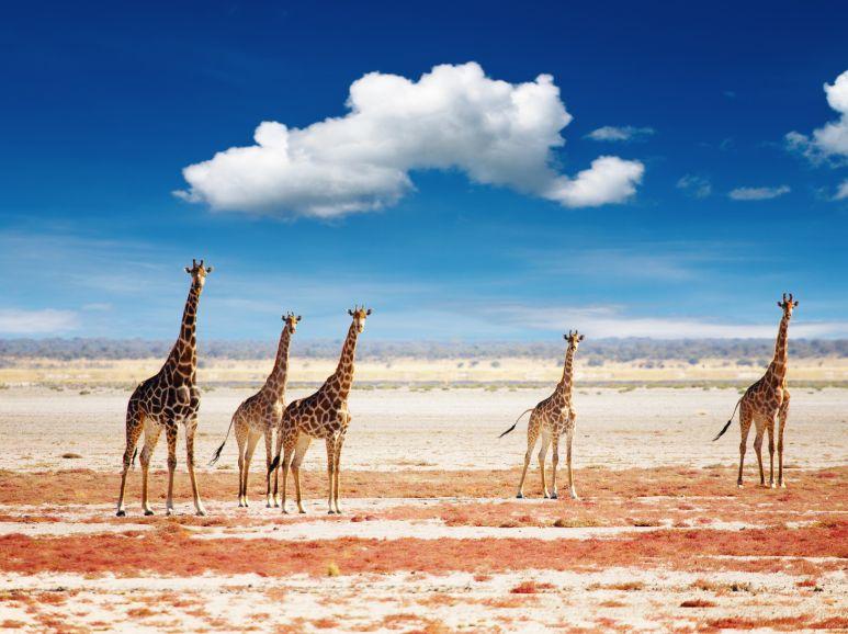 Reiseziele in Afrika: Zu Gast in der Wiege der Menschheit